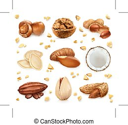 Nuts in the shell, vector icon set, isolated on white...