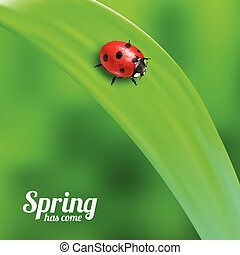 Ladybug on green grass - Bright spring background design...