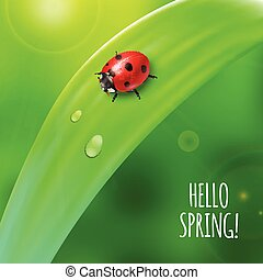 Ladybug on green grass. - Bright spring background design....