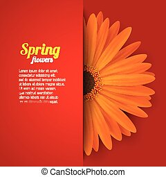 Spring flower in paper pocket - Bright spring background...