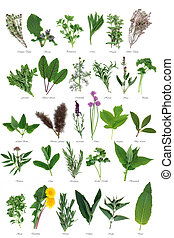 Large Herb Selection - Large fresh herb selection used for...