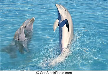 dolphin show in caribbean tuquoise water swimming stand