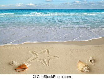 mer, coquilles, etoile mer, exotique, sable, turquoise,...