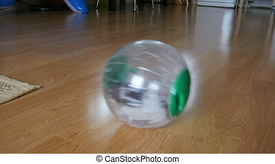 """hamster pet in wheel, plastic ball inside home"""