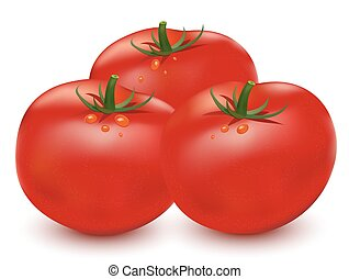 Tomatoes vector illustration on white background