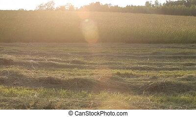 Sun Evening Hayfield Grass Lens Flare