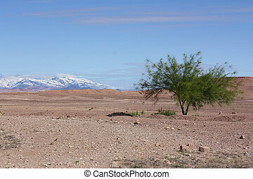Green tree in desert with mountains - A lone green tree...