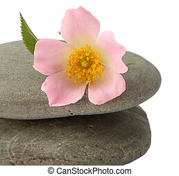 stone with flower