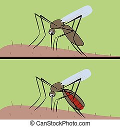 The mosquito drinks blood . The insect vector of malaria and fev