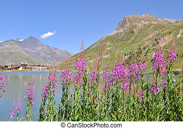 Lake of Tignes- Alpes - pink mountain flowers at Lake Tignes...