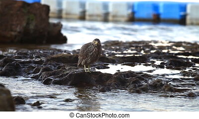 A bird sitting on a rock on the shore of the Red Sea