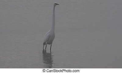 white egret in the water - This video is about Untitled...