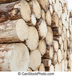 Background stack of wood - A pile of logs stacked pine logs