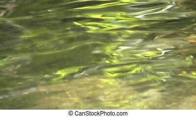 Rippling water close up - Rippling green water, close up