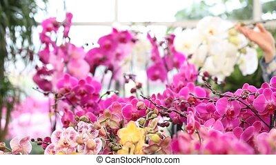 woman walking in the garden flowers - woman walking in the...