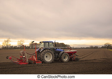 working late - farmer sowing spring barley at sunset