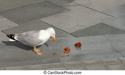 seagull eating cake on street