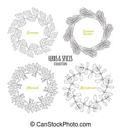 Spicy herb circle frames collection. Hand drawn lovage,...