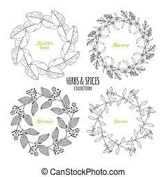 Spicy herb circle frames collection. Hand drawn kaffir lime,...
