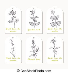 Tags collection with hand drawn spicy herbs melissa, mint,...