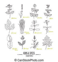 Hand drawn herbs and spices collection Outline style...