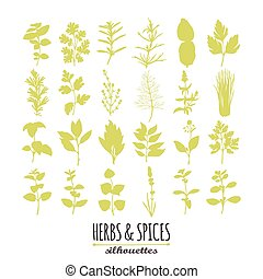 Collection of hand drawn spicy herbs silhouettes. Culinary...
