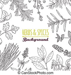 Hand drawn herbs and spices background. Culinary template...