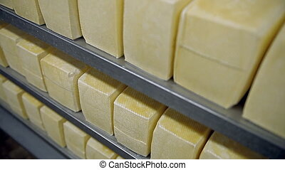 Shelves with cheese - The production of cheese. Shooting in...