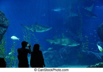 Man and woman in front of large aquarium