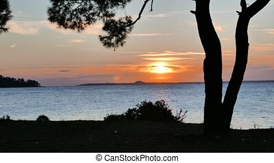 Pine tree silhouette with sunset over the sea. 4k - Pine...
