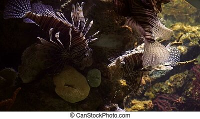 4K, Colorful Fishes, Seahorses, Corals, Marine Life,...