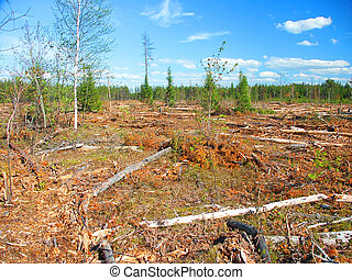 Jack Pine Logging Michigan - Large area of northern Michigan...