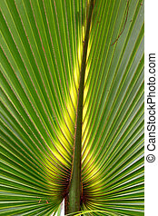 Florida Palmetto Background - Beautiful green coloration of...
