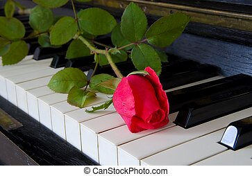 Red rose on the piano - greeting card - Red rose on the...