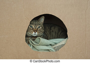 Kitty inside of box - A cute pet cat lays down in his nest...