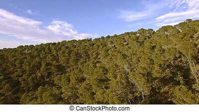 4K Aerial, Flight over a Andalusian forest, Spain -...
