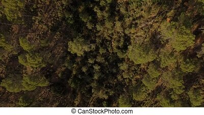 4K Aerial, Flight through forest - Different approaches to...