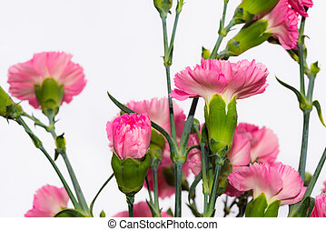 Arrangement of beautiful pink divine flowers blooming in...