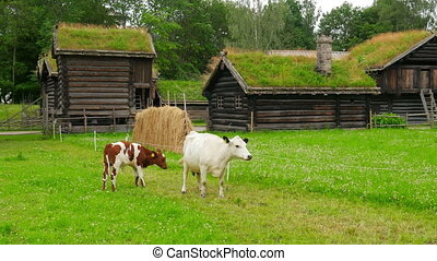 """animal husbandry livestock breeding, norwagian village, green grass rooftop, norway"""