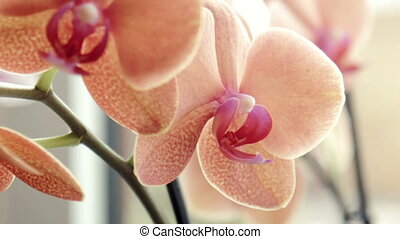 Close shot of an orchid placed on window