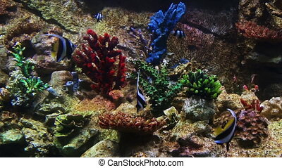 Fish in a coral reef