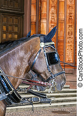 head of stagecoach horses in detail waiting in front of...
