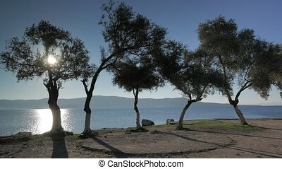 Sea view through the olive trees glowing in sunset light in...