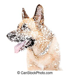 German shepard dog - German Shepard Dog Portrait