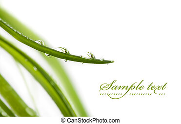 Water drops - Fresh water drops on green leaves, shallow...