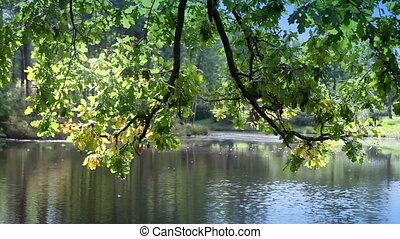 tree with bright foliage is reflected in the lake