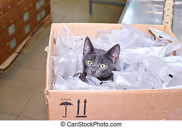 Black cat sitting in a cardboard box including packing bags...