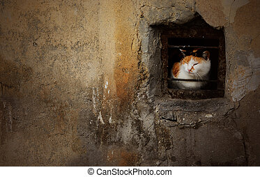 Dramatic portrait of street stray cat sitting in the small basement window of abandoned house