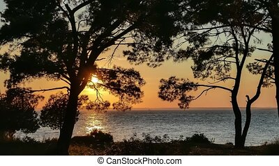 Sunset over the sea through pine trees with fishing boat in...