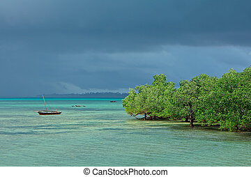 Seascape with mangrove trees